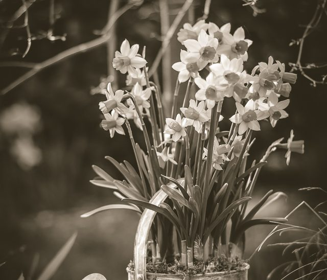 Frühling im Nostalgie-Look