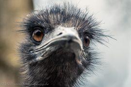 Was guckst Du? (EMU)