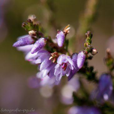 Blüten-Intermezzo II