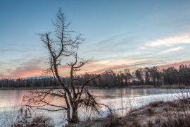 der tote Baum am Riedsee