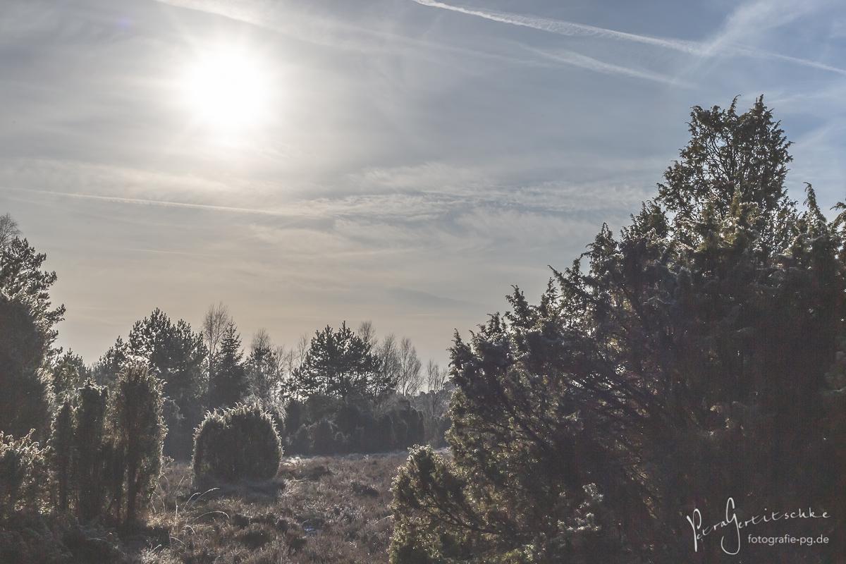 Raureif-Zauber in der Heide