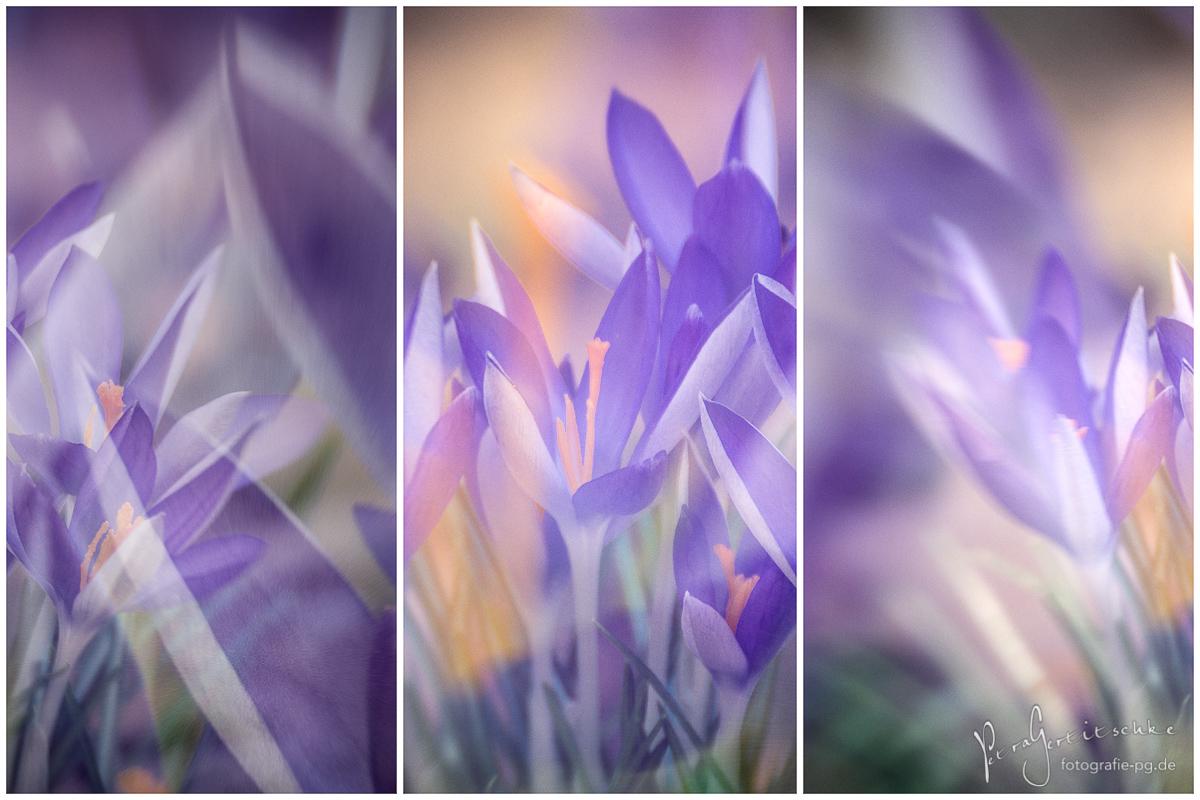 Frühlings-Triptychon